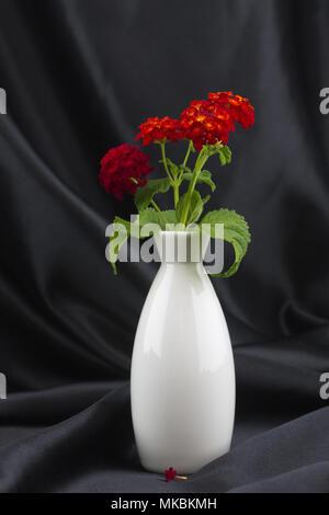 Colorful red of desert lantana is highlighted elegantly in white vase against black satin background - Stock Image