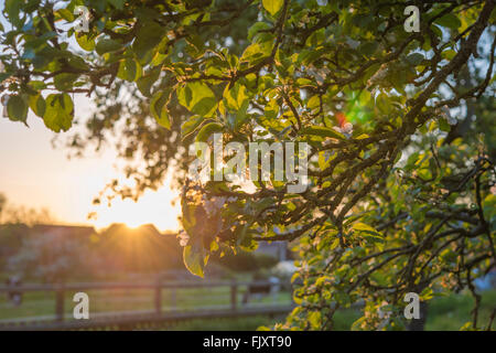 Low Angle View Of Leaves Growing On Tree At Field - Stock Image