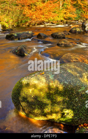 Fiery autumn colours on the East Dart River near Dartmeet, in Dartmoor National Park - Stock Image