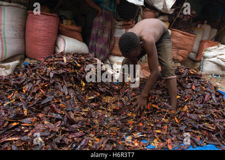 Young boy sorting a pile of dried chillis on the floor of the market at Dire Dawa, Ethiopia - Stock Image