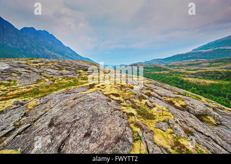 Lichen are growing on the fjell near Bodø in Nordland, Norway. - Stock Image