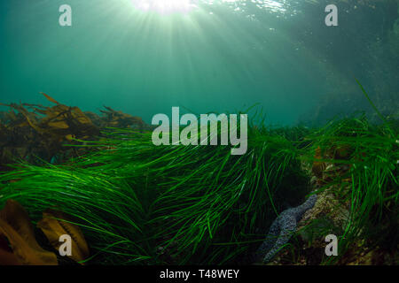 Sunrays and surf grass - Stock Image