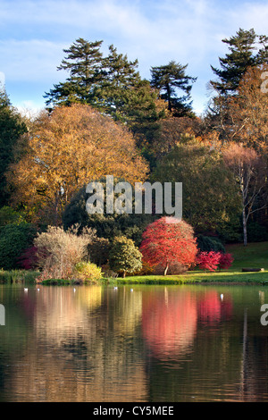 Autumn colours in the grounds of Mount Stewart, Northern Ireland. - Stock Image