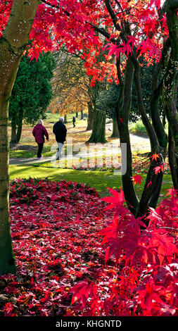 Ashbounre Park, Derbybshire, UK. 17th November, 2017. UK Weather bright colourful autumn day in Ashbounre Park, - Stock Image