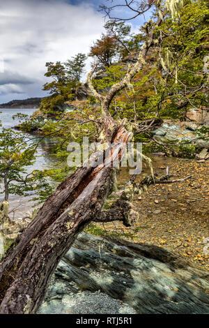 Tierra del Fuego National park, Isla Grande del Tierra del Fuego, Tierra del Fuego, Antartida e Islas del Atlantico Sur, Argentina - Stock Image
