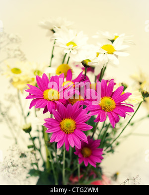 pink and white daisies - Stock Image