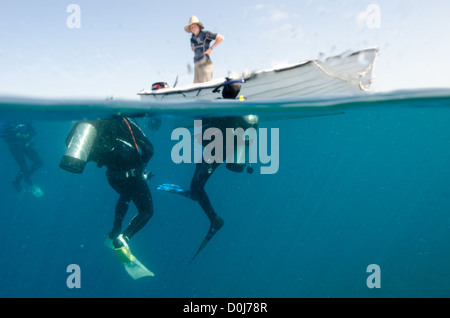 Three Scuba divers surface after a dive on the Great Barrier Reef to be picked up in a dinghy after a drift dive. - Stock Image