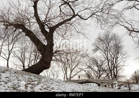 Large Bare Tree near Ornate Bridge in Winter, Central Park, New York City, New York, USA - Stock Image