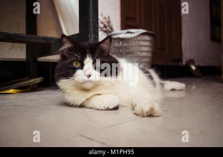 Cat in black and white relaxing on the ground - Stock Image