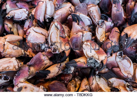 Tilburg, Netherlands. Lots and Lots of Crated Lobster Legs at Market. - Stock Image