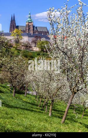 Prague Castle view, Petrin park flowering trees, Spring in Prague, Czech Republic, Europe - Stock Image