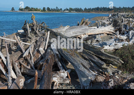 Natual forest debris washed downstream during flood conditions litter the most of Englishman River at Surfside at - Stock Image