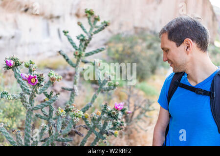 Cane Cholla cactus with vivid pink flower and man in Main Loop trail in Bandelier National Monument in New Mexico in Los Alamos - Stock Image