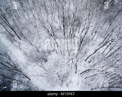 Aerial top view of winter forest - Stock Image