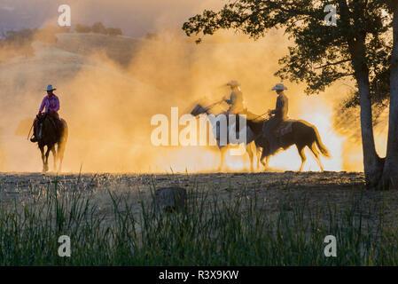 USA, California, Parkfield, V6 Ranch three riders on horseback at dawn kicking up the dust (MR) - Stock Image