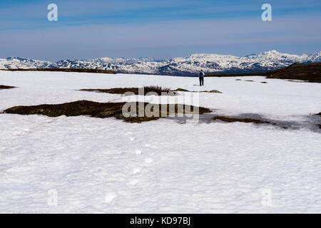 Distant hiker walking leaving footprints in snow on Mount Storsteinen mountain in summer. Tromso, Troms, Norway, - Stock Image
