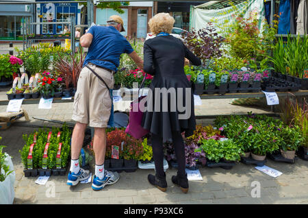 Woman buying garden plants from a market stall in Ripon North Yorkshire - Stock Image