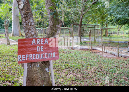 Small parrot breeding facility in Cuba where parrots are raised to be released back into the wild. - Stock Image