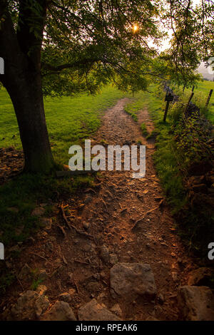 A public countryside footpath passes under a tree along a rocky cotswold path. - Stock Image