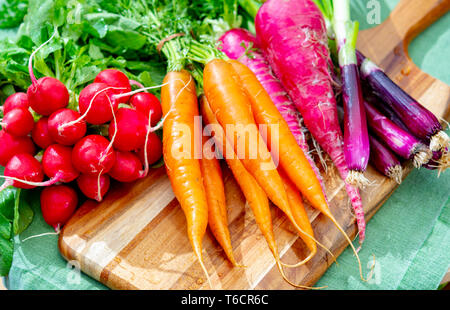 Bunches of fresh red small and long radish, carrots and purple onion, new harvest of healthy vegetable close up - Stock Image