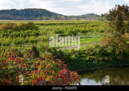 Beautiful vineyards and pond near Beamsville Ontario in the Niagara Peninsula, ON, Canada. - Stock Image