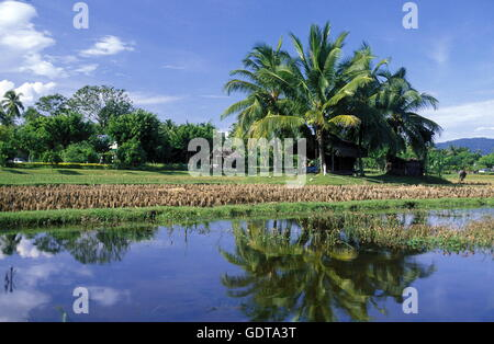 The ricefield at Pantai Cenang of Langkawi Island in the northwest of Malaysia - Stock Image