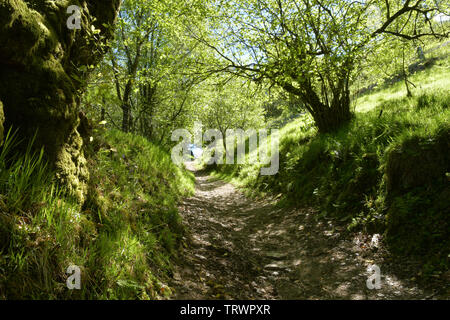 A bridleway from Exford, part of the Exe valley way, wends its way up the steep hill towards the top of Road Hill on Exmoor. Somerset.England. UK. - Stock Image