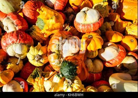 Squash is a variety of colorful squash in in a collage of color. - Stock Image