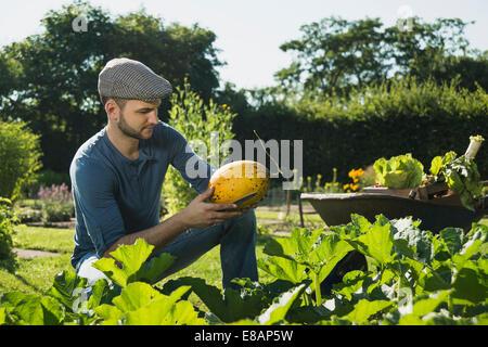 Gardener checking vegetable - Stock Image