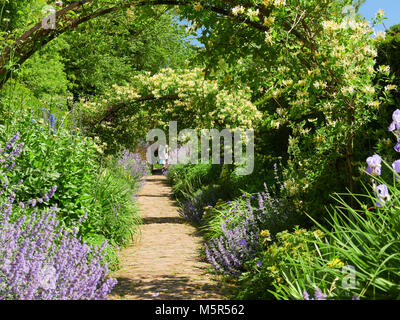 Honeysuckle arches over a garden path  on a sunny day in an English country Garden, UK. - Stock Image