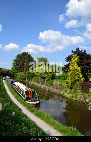 Narrowboats moored beside the towpath at Alrewas on the Trent & Mersey Canal - Stock Image