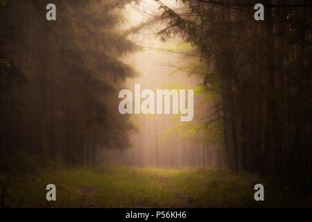 Dark fog in the forrest. Soft light on the rural path. - Stock Image