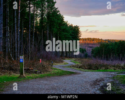UK Weather; Loverly afternoon sunset light at the Fairoak Valley Pools on the Fairoak Trail, Cannock Chase, Staffordshire - Stock Image