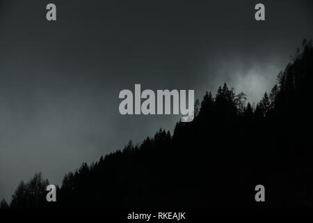 Foggy landscaoe. Silhouette of firs and larches tree tops in coniferous alpine forest against dramatic clouds and mist. Adamello park, Passo del Tonal - Stock Image