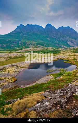 Lichen and mosses are growing on the fjell near Bodø in Nordland, Norway. - Stock Image