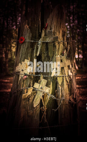Wooden crosses and red poppies tucked behind barbed wire on a bullet and shrapnel riddled tree stump as a WWI memorial - Stock Image