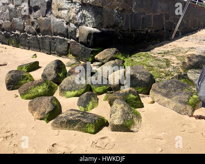 Mossy rocks on the beach in Cape Cod Mass - Stock Image