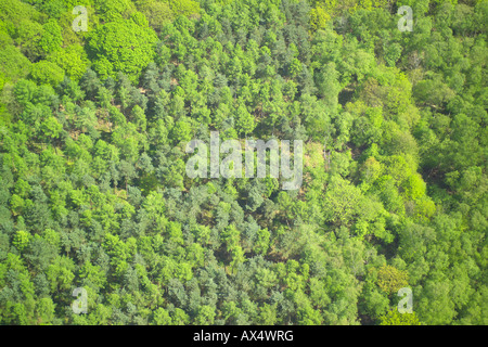 Aerial view of woodlands consisting of Deciduous and Coniferous Trees - Stock Image