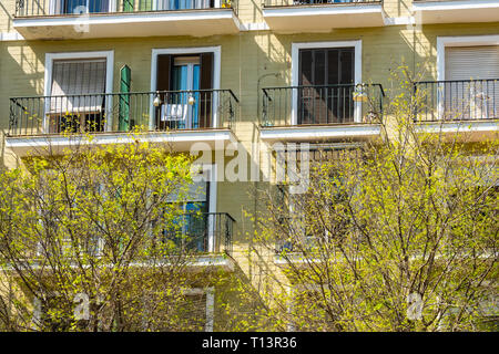 First spring buds sowing on tress in March in Seville, Spain - Stock Image