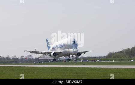 Hamburg, Germany - April 17, 2018: Airbus Beluga A300-600ST Number 2 landing at the Airbus Plant in Hamburg Finkenwerder - Stock Image