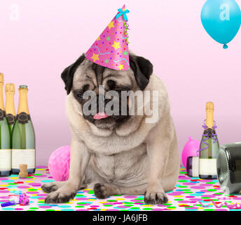 cute pug puppy dog wearing party hat, lying down on confetti, drunk on champagne with hangover, on pink background - Stock Image