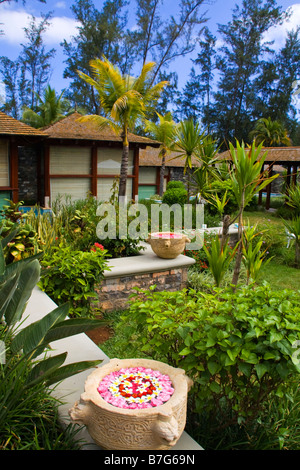 Resort Moevenpick Spa Frangipani flowers in garden  Mauritius Africa - Stock Image