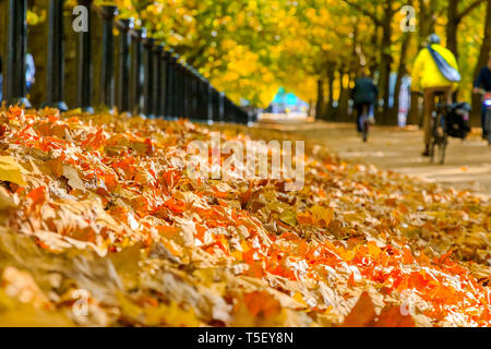 Selective focus, pile of autumn leaves with constitution hill road of London in the background - Stock Image