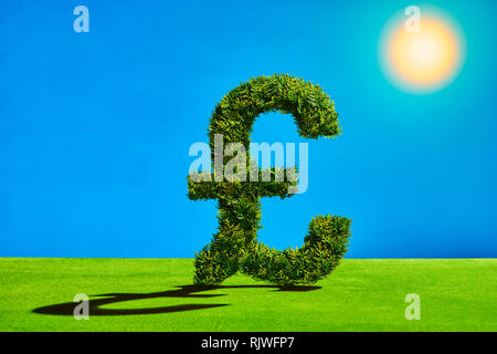 Topiary Tree in the Shape of a Pound Symbol - Stock Image