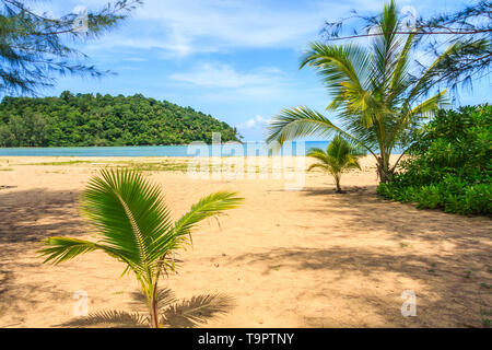 Young palm trees on Nai Yang beach, Phuket, Thailand - Stock Image