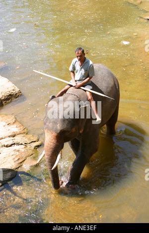 An elephant and mahout in the river near the Pinawela Elephant Orphanage Sri Lanka - Stock Image