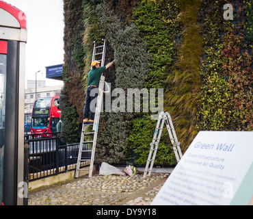 A Green Wall being planted in London to improve air quality UK - Stock Image