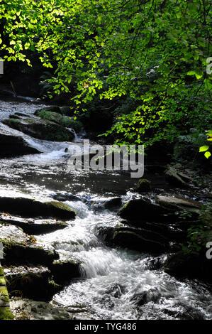 Cascade on the stream through St Nectans glen near Tintagel in Cornwall.UK - Stock Image