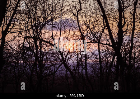 Forest of tounsand branches - Stock Image