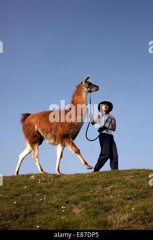 Gerlardine Hill leads her Llama on hilltop - Stock Image